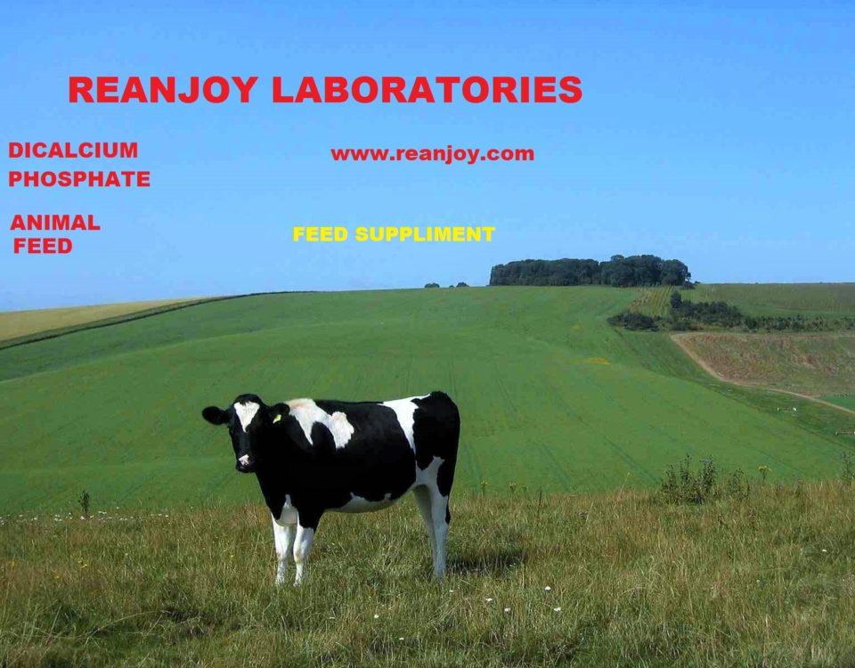 dicalcium phosphate cow