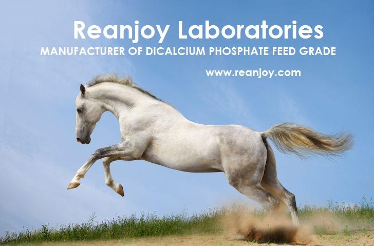 REANJOY DCP- HORSE