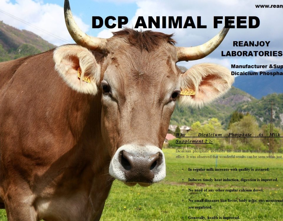 DCP FOR COW